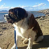 Adopt A Pet :: Tonner - Denver, CO