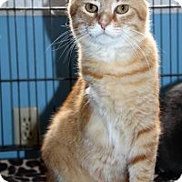 Adopt A Pet :: Bop - LaGrange, KY