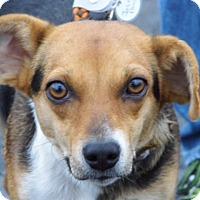 Adopt A Pet :: STARR - Toronto, ON