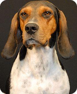 Hound (Unknown Type) Mix Dog for adoption in Newland, North Carolina - Virginia