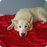 Adopt A Pet :: Maggie - Summerville, SC