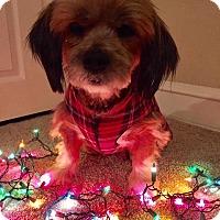 Adopt A Pet :: Sammie - Bucks County, PA