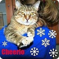 Adopt A Pet :: Cheerio;I love to watch snow! - Manchester, NH