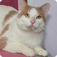 Adopt A Pet :: Dave - Elmwood Park, NJ
