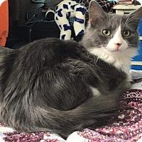 Adopt A Pet :: Branna - Georgetown, DE