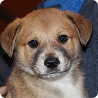 Adopt A Pet :: Rigatoni - Phoenix, AZ