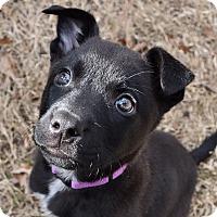 Adopt A Pet :: Gracie - Nyack, NY
