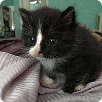 Adopt A Pet :: Pudge - Dallas, TX