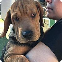 Adopt A Pet :: Nick Kroll - Brooklyn, NY