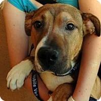 Adopt A Pet :: Spike URGENT NEEDS FOSTER ASAP - Sacramento, CA