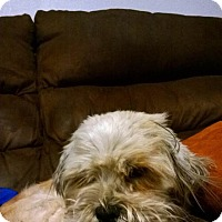 Adopt A Pet :: Spanky - Lakewood, CO