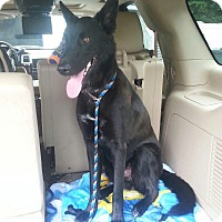Adopt A Pet :: Pax in CT - Manchester, CT