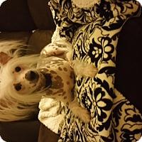 Adopt A Pet :: PAPIO - Riverside, CA