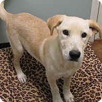 Adopt A Pet :: Nala - Charlemont, MA