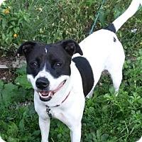 Adopt A Pet :: Della - Oberlin, OH