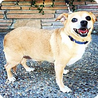 Adopt A Pet :: Sally - Santa Cruz, CA