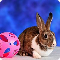 Adopt A Pet :: Lunar - Marietta, GA