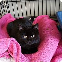Adopt A Pet :: Beau - Island Park, NY