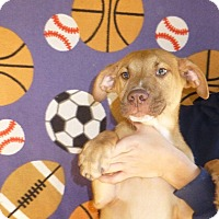 Adopt A Pet :: Majic - Oviedo, FL