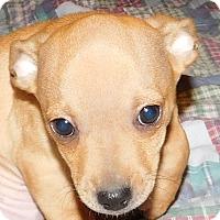 Adopt A Pet :: Mancha - MINNEAPOLIS, KS