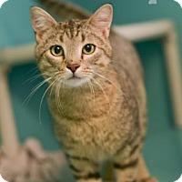 Adopt A Pet :: Les - West Des Moines, IA