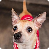 Adopt A Pet :: Pancho - Rochester, MN