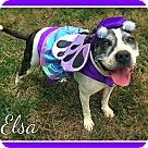 Adopt A Pet :: Dizzy