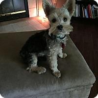 Adopt A Pet :: Jack-pending adoption - Manchester, CT