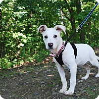 Adopt A Pet :: Peaches - New Castle, PA