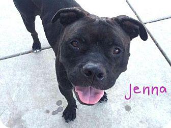 Pit Bull Terrier Mix Dog for adoption in Sacramento, California - *JENNA