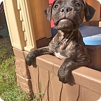 Adopt A Pet :: Shiloh - Warrenville, IL