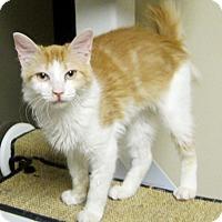 Adopt A Pet :: Fiona - Georgetown, TX