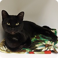 Adopt A Pet :: Ms Kitty - Columbia, IL
