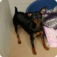 Adopt A Pet :: Bodie - Richmond, KY