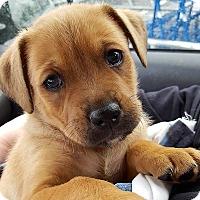 Adopt A Pet :: Tanner - Bedford, VA