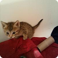 Adopt A Pet :: MORGAN - wayne, MI