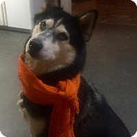 Adopt A Pet :: Fallon - Roswell, GA