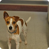 Adopt A Pet :: Hitchens - Clarksville, TN