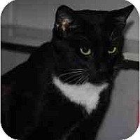 Adopt A Pet :: P.J. - Marietta, GA