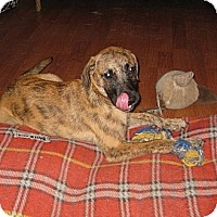Adopt A Pet :: Harmony - Vidor, TX