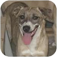 Adopt A Pet :: P-Pam4-Blue - Colorado Springs, CO