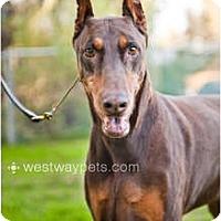 Adopt A Pet :: Jonas - Santee, CA