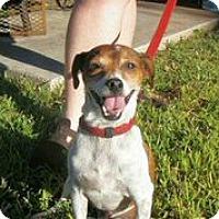 Adopt A Pet :: Buster Lee Geordie - Austin, TX
