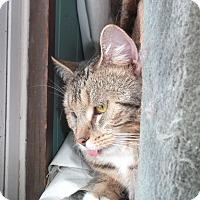 Adopt A Pet :: Gabriel - Walkersville, MD