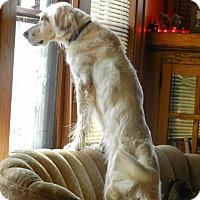Adopt A Pet :: Charlie - Wood Dale, IL