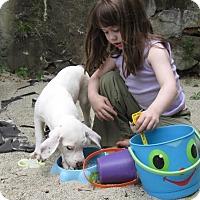 Adopt A Pet :: Cassanova - Middletown, RI