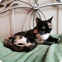 Adopt A Pet :: Willa - Harrisburg, NC