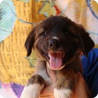 Adopt A Pet :: Aurora - Oviedo, FL