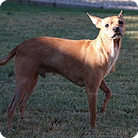 Adopt A Pet :: Bingo - Tempe, AZ