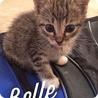 Adopt A Pet :: Belle - Gainesville, FL